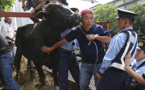 Fukushima farmers protests with their cows in Tokyo